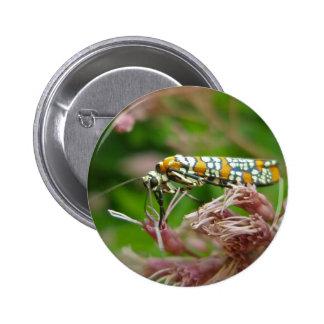 Ailanthus Webworm Moth (Atteva punctella) Items 6 Cm Round Badge