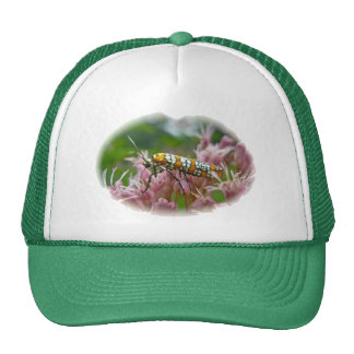 Ailanthus Webworm Moth (Atteva punctella) Items Cap