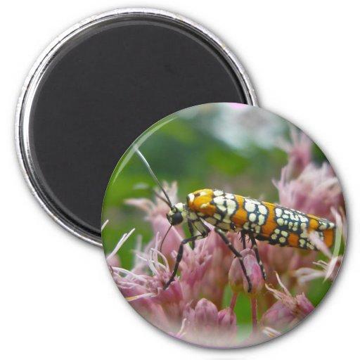 Ailanthus Webworm Moth (Atteva punctella) Items Refrigerator Magnet