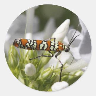 Ailanthus Webworm Moth Round Sticker