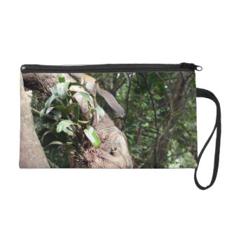 air plant in tree with squirrel hiding wristlet purses