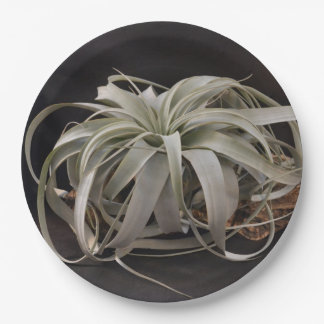 Air Plant Xerographica 9 Inch Paper Plate