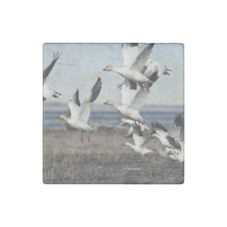 Airborne Snow Geese Stone Magnet