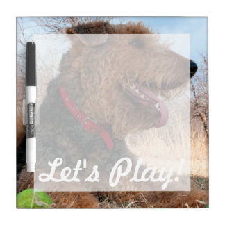 Airedale playing ball in dried grasses dry erase boards