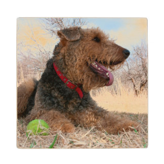 Airedale playing ball in dried grasses wood coaster