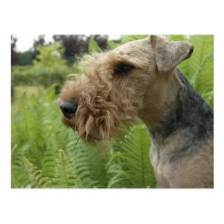 Airedale Postcard