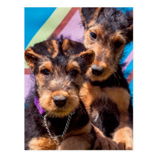 Airedale puppies in a green bucket postcard