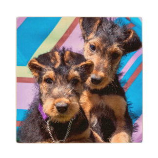 Airedale puppies in a green bucket wood coaster