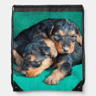 Airedale puppies lying on towel drawstring bag