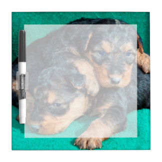 Airedale puppies lying on towel dry erase board