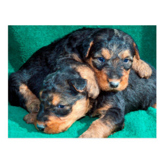 Airedale puppies lying on towel postcard