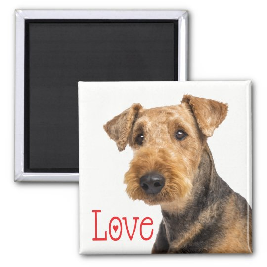 Airedale Terrier Brown & Black Puppy Dog Red