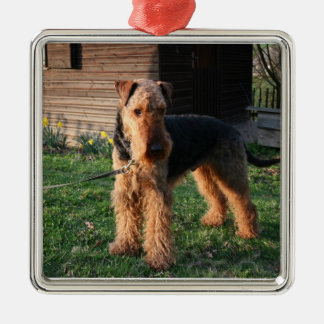 Airedale_Terrier full.png Silver-Colored Square Decoration