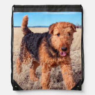 Airedale Terrier in a field of dried grasses Drawstring Bag