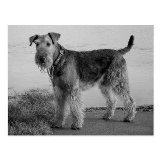 Airedale Terrier Puppy Dog Black & White Postcard
