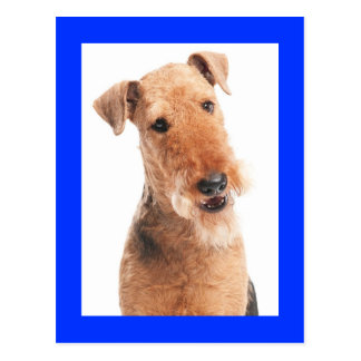 Airedale Terrier Puppy Dog Blue Postcard