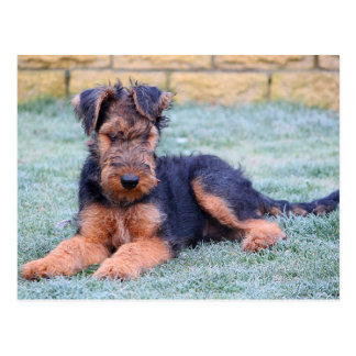 Airedale Terrier Puppy Dog Green Postcard