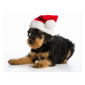 Airedale Terrier Puppy Wearing Santa Hat Postcard