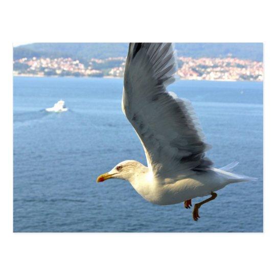 Airmail Seagull Postcard