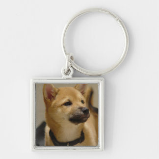 Akita Pictures  Keychain