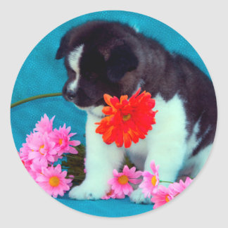 Akita puppy with flowers classic round sticker