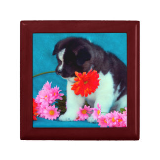 Akita puppy with flowers gift box