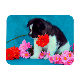 Akita puppy with flowers magnet