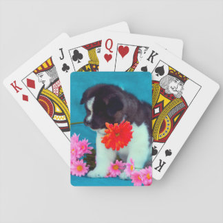 Akita puppy with flowers playing cards