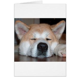 akita sleeping.png card