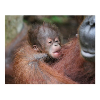 Akmad's New Baby Son at Camp Leakey Postcard