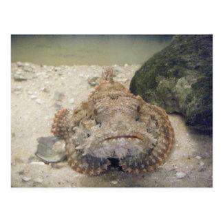 Alabama Sea Life #2 Postcard