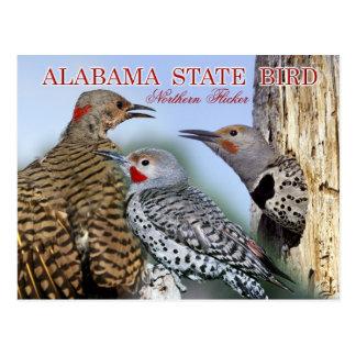 Alabama State Bird - Northern Flicker Post Cards