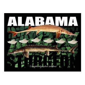 Alabama Sturgeon-Collage-Postcard Postcard