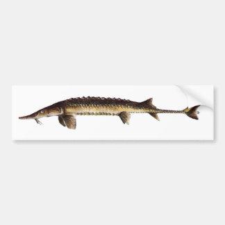Alabama Sturgeon - Scaphirhynchus suttkusi Bumper Sticker