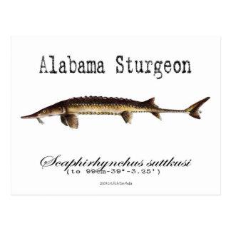 Alabama-White-Postcard Postcard