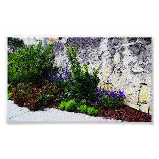 Alamo flowers poster