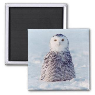 Alaska Arctic Snowy Owl Winter Scene Square Magnet