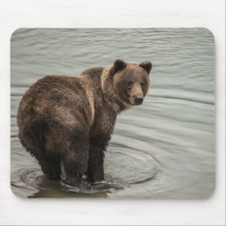 Alaska Brown Bear (Grizzly) Mouse Pad
