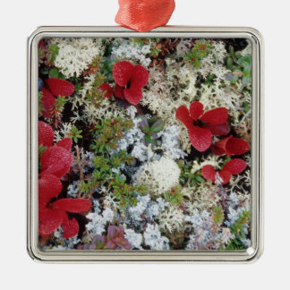 Alaska, Denali National Park, Arctic tundra is Christmas Ornament