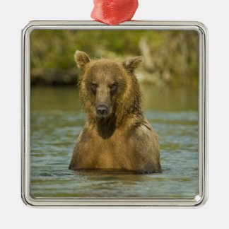 Alaska. Katmai NP. Coastal Brown Bear fishing Christmas Ornament