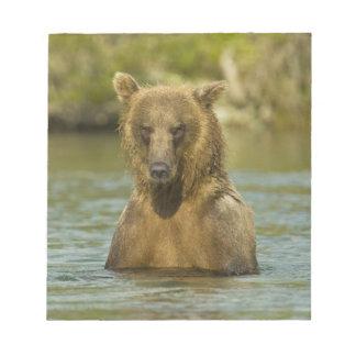 Alaska. Katmai NP. Coastal Brown Bear fishing Notepad