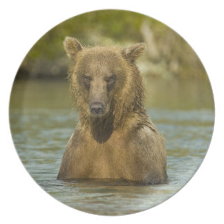 Alaska. Katmai NP. Coastal Brown Bear fishing Party Plates