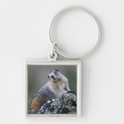 alaska marmot key chain