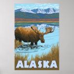 Alaska - Moose Drinking Water Poster