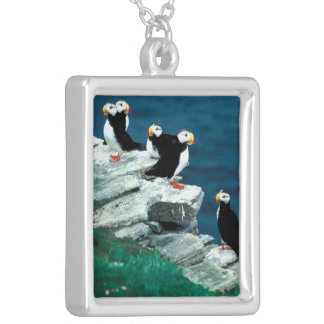 Alaska Puffins Feathered Colorful Birds Silver Plated Necklace