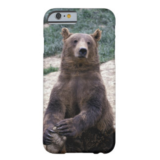 Alaska, southeast region Brown bear Ursus Barely There iPhone 6 Case