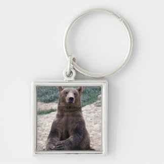Alaska, southeast region Brown bear Ursus Silver-Colored Square Key Ring