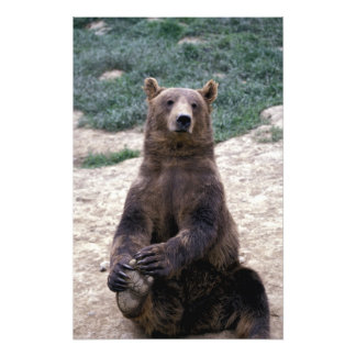 Alaska, southeast region Brown bear Ursus Photo Print