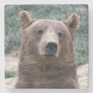 Alaska, southeast region Brown bear Ursus Stone Coaster
