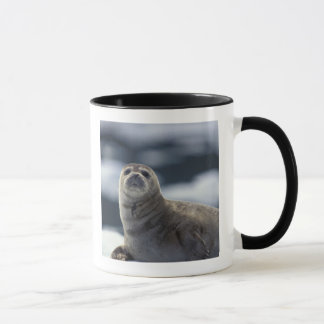 Alaska, southeast region Harbor seal on ice Mug